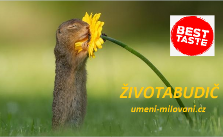 ZivotaBudic - BEST TASTE